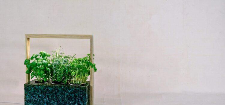 NordicGrow: Dansk startup laver bæredygtig indendørs have