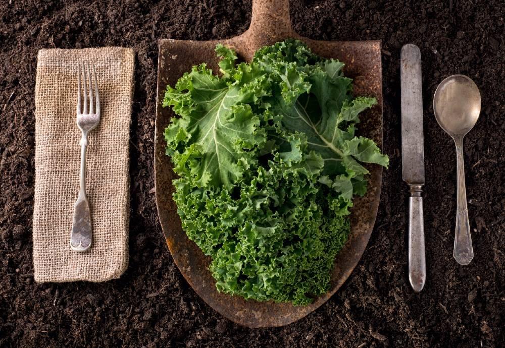 Zero Foodprint, Bizz Up